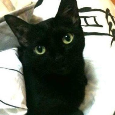 Thumb gato preto