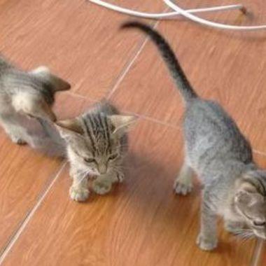 Thumb 3 gatinhos