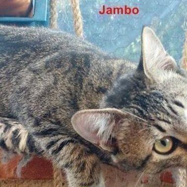 Thumb jambo1