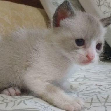 Thumb gato3