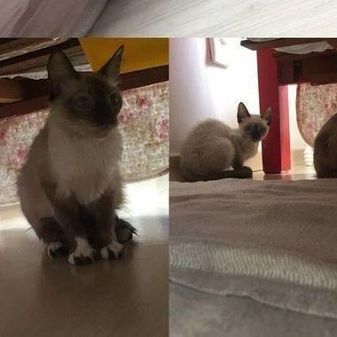 Thumb gatinhos  1