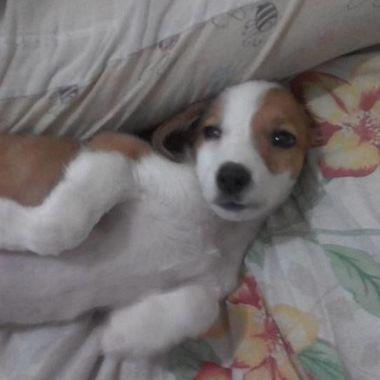 Thumb cachorro 4