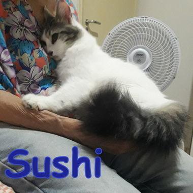 Thumb sushi 4