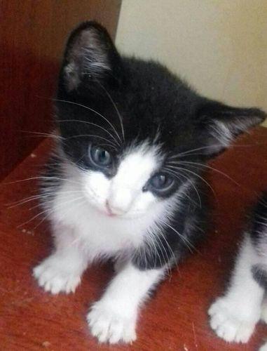 Wide gatinhos 2