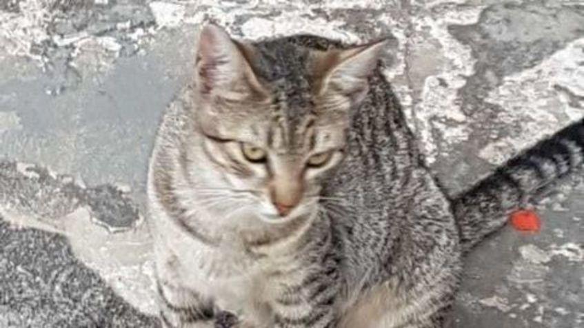 Wide gato 1