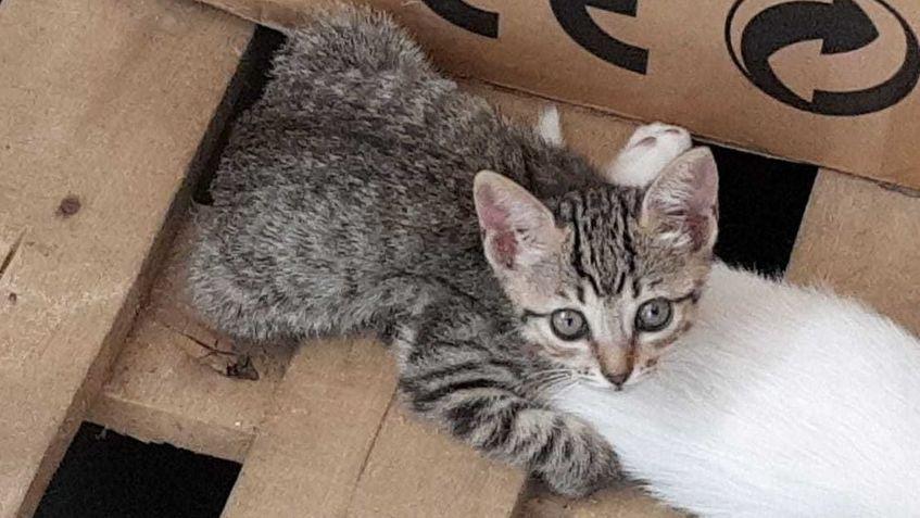 Wide gato 2 jan