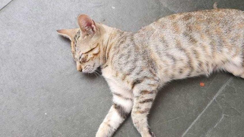 Wide gato 4 jan