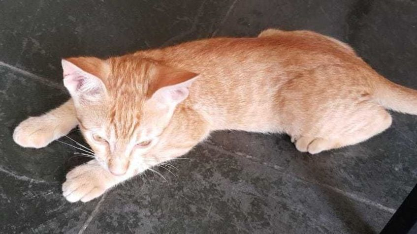 Wide gato 6 jan