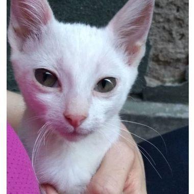 Thumb gato branco