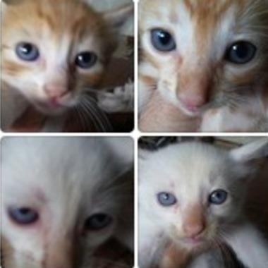 Thumb 4 gatinhos