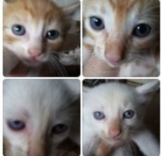 Wide 4 gatinhos