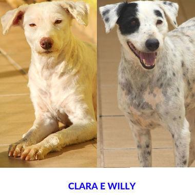 Thumb clara e willy