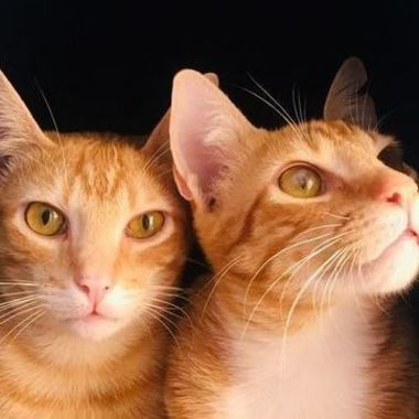 Thumb gatos5