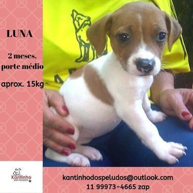 Thumb b luna  1