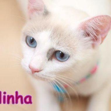 Thumb belinha 04