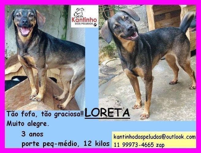 Wide loreta1