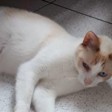 Thumb gato castrado vermif fiv felv 2