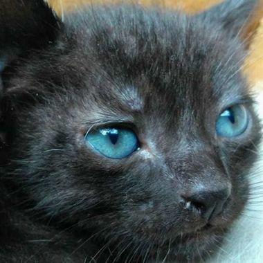 Thumb olhos azuis 2