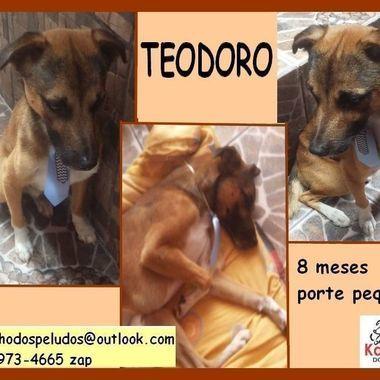 Thumb b teodoro regiane