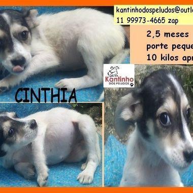 Thumb b cinthia