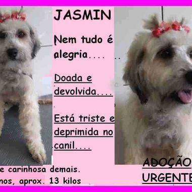 Thumb jasmin