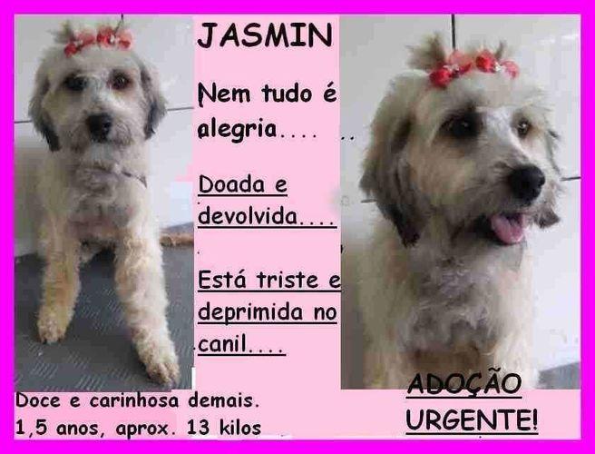 Wide jasmin