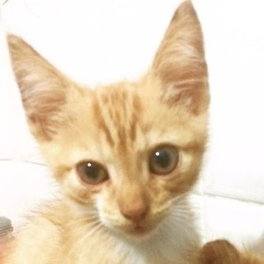 Thumb gatosmiriam